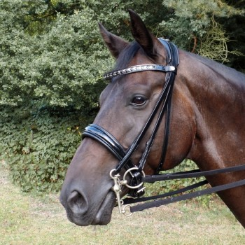 Double Bridle Kostolany®